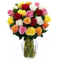 Colourful Roses